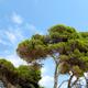 Mallorca Bosque 06 - VideoHive Item for Sale
