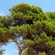 Mallorca Bosque 07 - VideoHive Item for Sale
