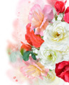 Rose Background - PhotoDune Item for Sale