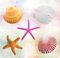 Shells Background - PhotoDune Item for Sale