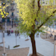 Placa Barceloneta 01 - VideoHive Item for Sale