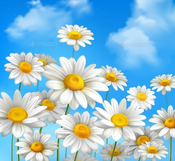 GraphicRiver Daisies On Blue Sky 10426966