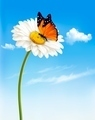 Nature spring daisy flower with butterfly - PhotoDune Item for Sale