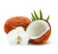 Coconut with leaves and white flower - PhotoDune Item for Sale