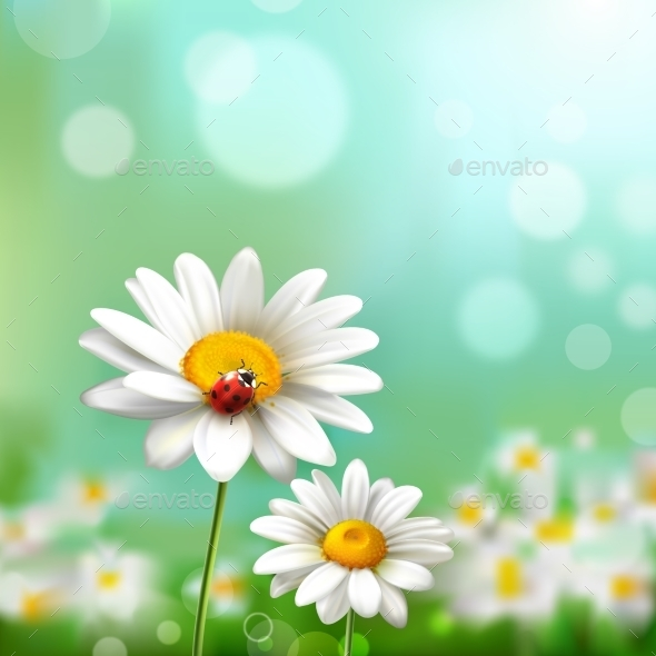 GraphicRiver Daisies With Ladybug 10428289