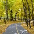 beautiful autumn park with soft sunlight - PhotoDune Item for Sale