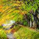 Maple corridor, Kawaguchiko lake, Japan - PhotoDune Item for Sale