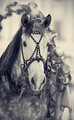 Muzzle of a white horse in a harness. - PhotoDune Item for Sale