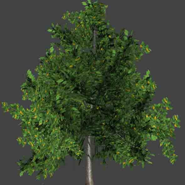ElmTree_3DModel - 3DOcean Item for Sale