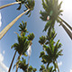 Driving under Palms during a Sun Day Summer Beach - VideoHive Item for Sale