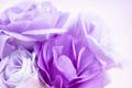 Flower Background Purple Lisianthus - PhotoDune Item for Sale