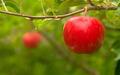An Apple Orchard Yields Fresh Fruit Washington State - PhotoDune Item for Sale