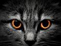dark muzzle cat close-up. front view - PhotoDune Item for Sale