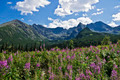 A beautiful valley in the Polish Tatra mountains - PhotoDune Item for Sale