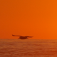 Sunset & Waves - VideoHive Item for Sale