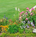beautiful flower bed and green grass - PhotoDune Item for Sale