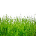 Green grass isolated on white background - PhotoDune Item for Sale