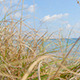 Beach Grass - VideoHive Item for Sale