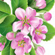 Blooming Branch - GraphicRiver Item for Sale