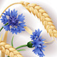 Wheat Ears and Cornflowers - GraphicRiver Item for Sale