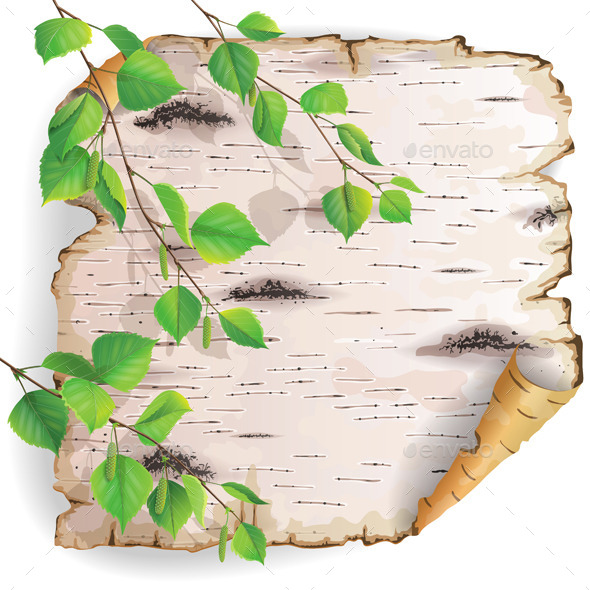 GraphicRiver Piece of Birch Bark 10457007