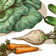 Various Vegetables - GraphicRiver Item for Sale