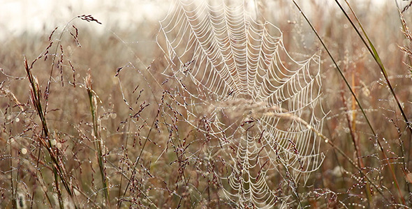 Spider Web Blows in the Breeze