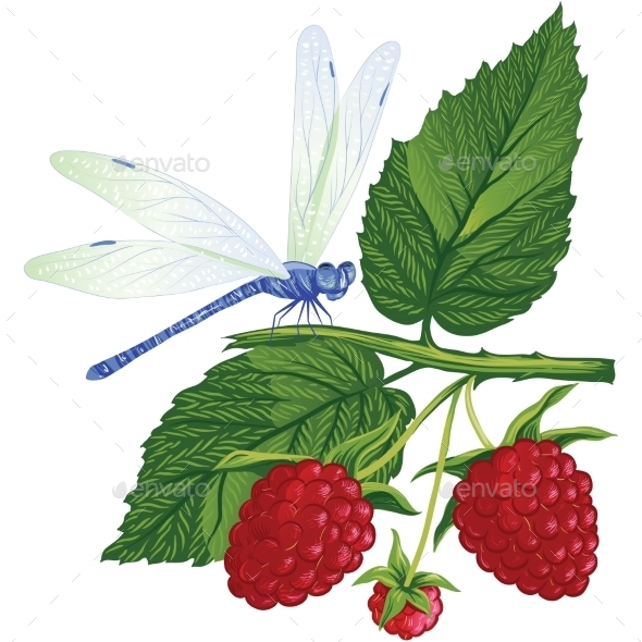 GraphicRiver Dragonfly Sitting on the Raspberries 10457653