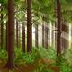 Green Sunny Forest Landscape - GraphicRiver Item for Sale