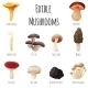 Edible Mushrooms  - GraphicRiver Item for Sale