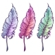 Feather in Three Colors