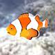 Animated Clownfish