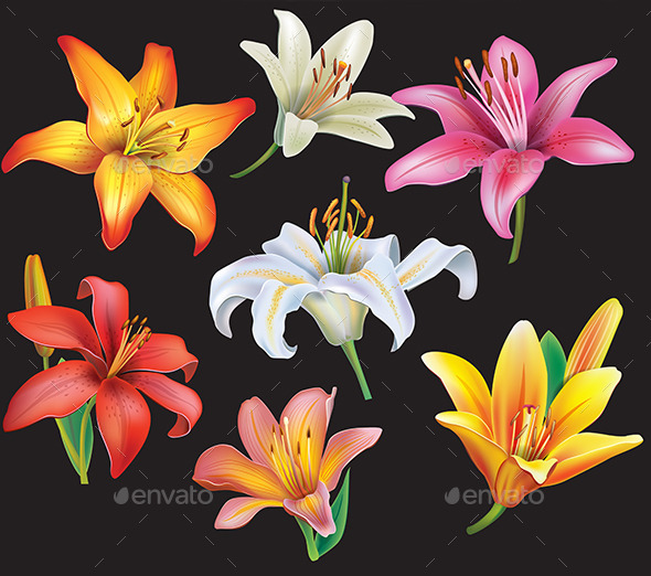 GraphicRiver Set of Lilies 10468939