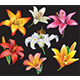 Set of Lilies - GraphicRiver Item for Sale