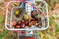 Basket of a childrens bicycle in autumn - PhotoDune Item for Sale