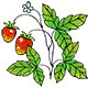 Strawberry Vine with Berries - GraphicRiver Item for Sale