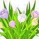 Crocus Bouquet - GraphicRiver Item for Sale