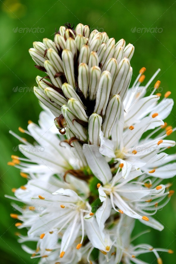 mountain flowers - Stock Photo - Images