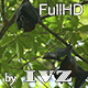 Flying Fox - VideoHive Item for Sale