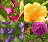 Stock Flowers (HD)