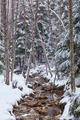 River flowing trough the forest on wintertime - PhotoDune Item for Sale