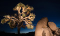Sunset Shadow Rock Formation Joshua Tree National Park - PhotoDune Item for Sale
