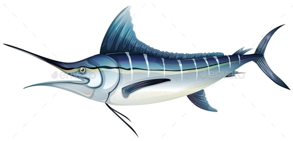 GraphicRiver Atlantic Blue Marlin 10485048