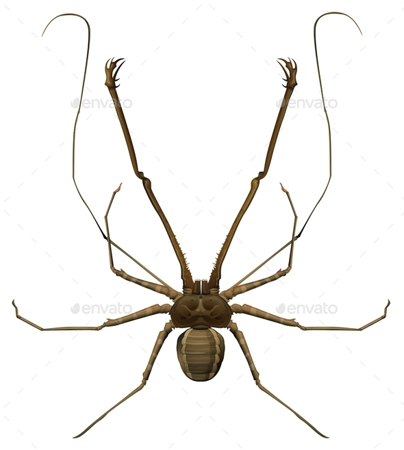 GraphicRiver Amblypygi Genus 10485609