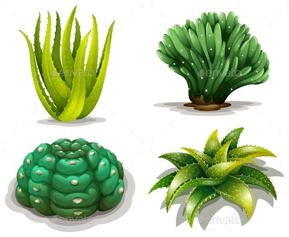 GraphicRiver Aloe Vera Plants and Cacti 10485706
