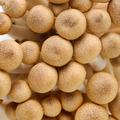 brown mushroom - PhotoDune Item for Sale