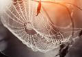 Cobweb in dew drops - PhotoDune Item for Sale