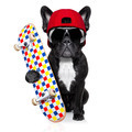skateboard skater dog - PhotoDune Item for Sale