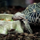 Turtle Eats - VideoHive Item for Sale