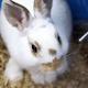 White Rabbit - VideoHive Item for Sale